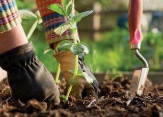 Kertész szakképesítés