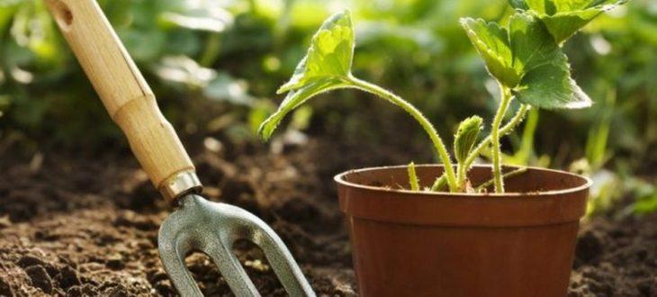 Dísznövénykertész szakképesítés